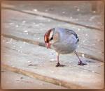 Lovely Little Sparrow