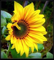The Last Sunflower by JocelyneR