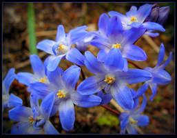 Bouquet of Muscaris by JocelyneR
