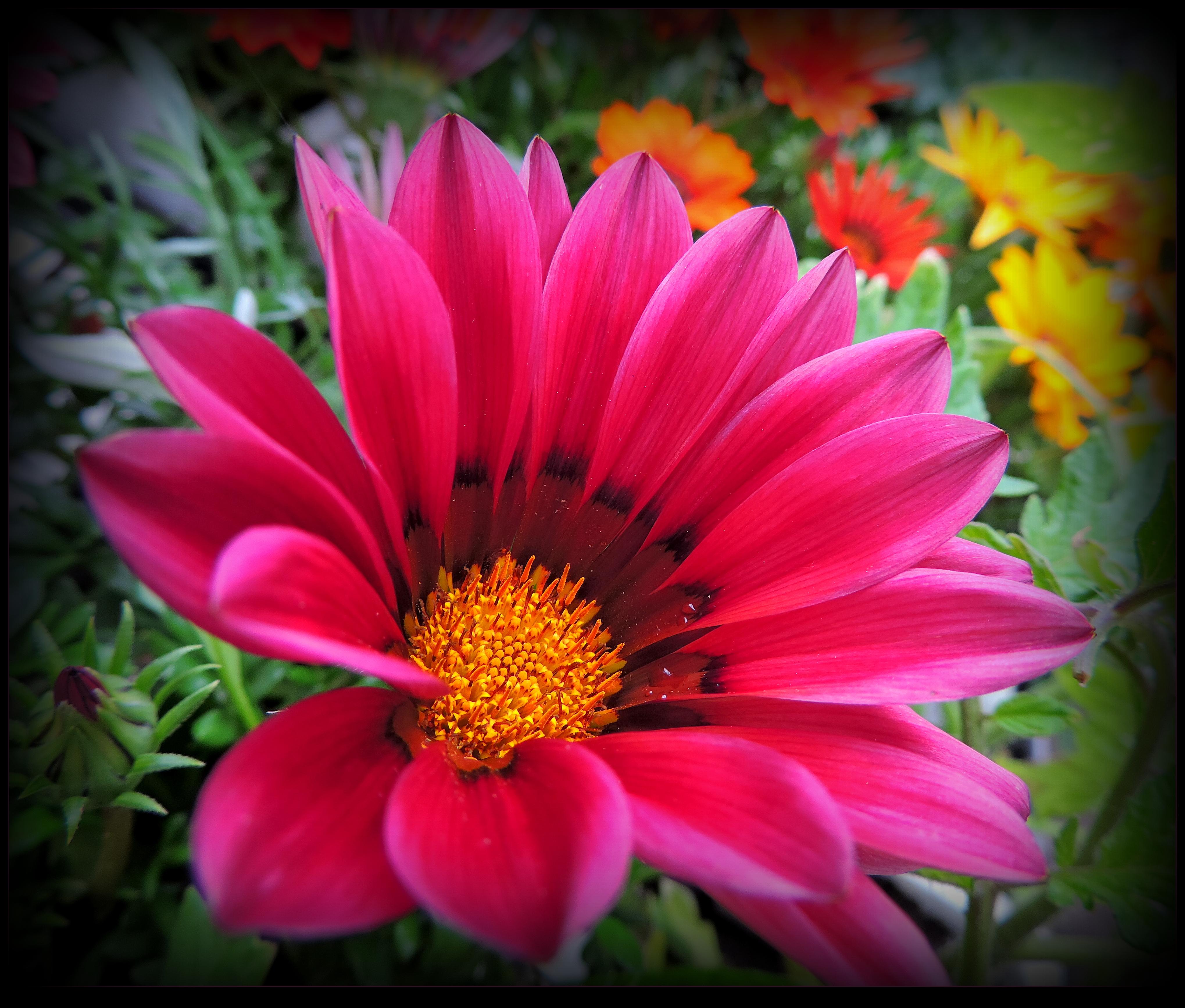 A Flower for Lili by JocelyneR on DeviantArt