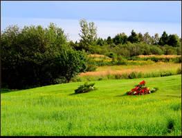 Red Plants on the Field by JocelyneR