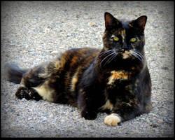 A Cat Lamda by JocelyneR