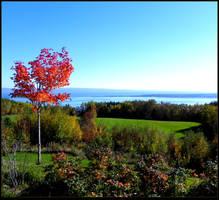 Green Field in Fall by JocelyneR