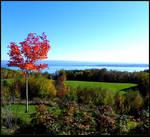 Green Field in Fall