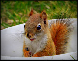 Relaxed Little Squirrel