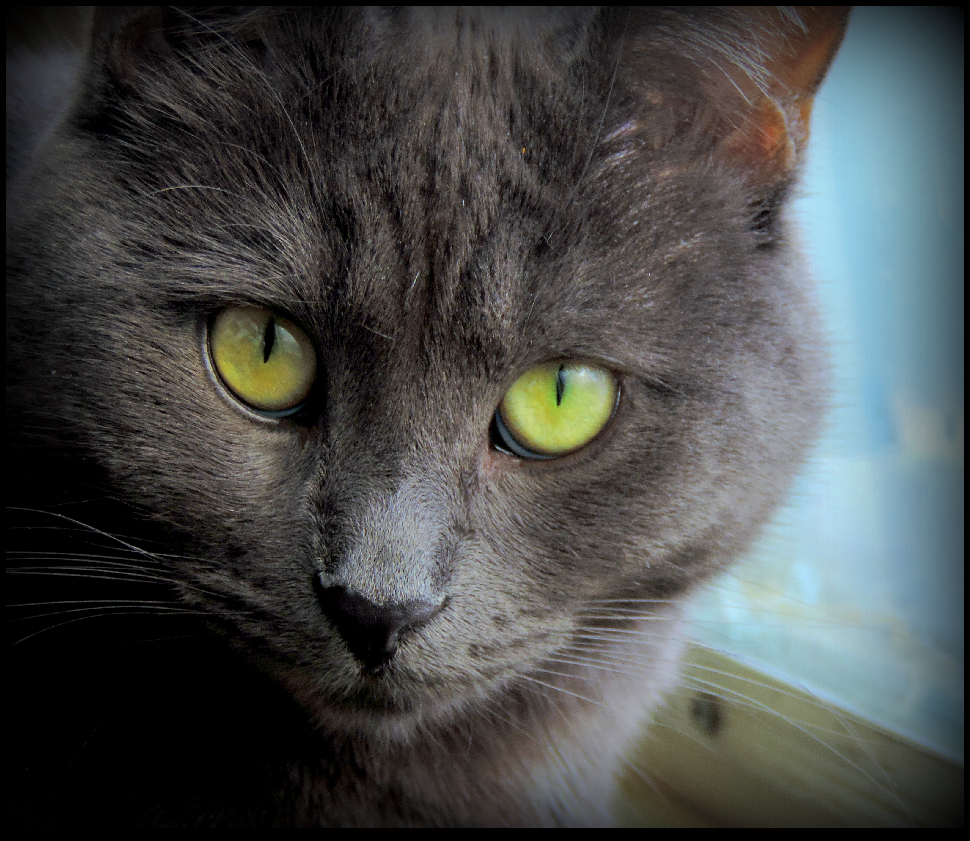 My Cat's Stare by JocelyneR