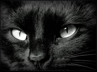 My Cat Eyes_ BW by JocelyneR