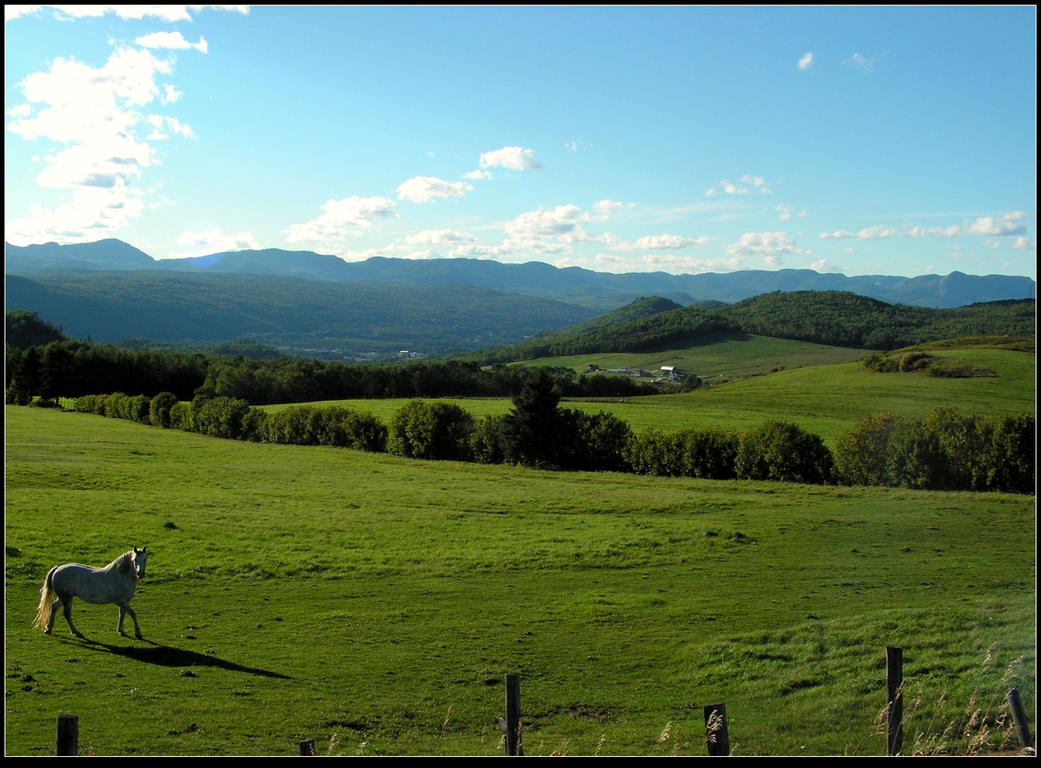 Country Scenery, Late Afternoon by JocelyneR