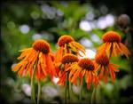 These Orange Flowers...