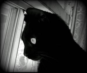 Curious Kitten 2010