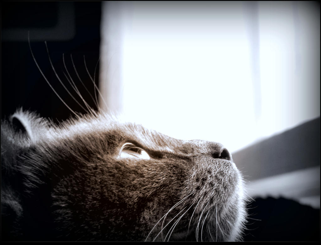 Feline Thoughts by JocelyneR