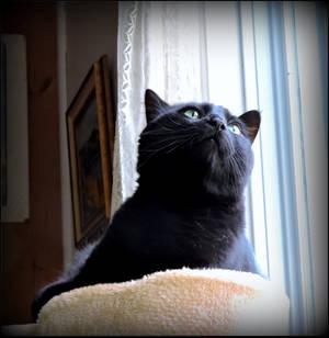Little Milou Fascinated