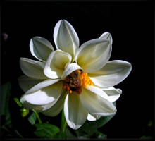 The Dahlia And The Bee by JocelyneR