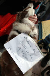 Occupy Seattle 7 by thememory666