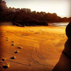 Huellas en Playa Escondida