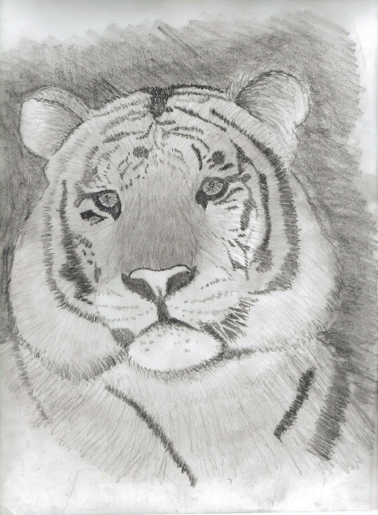 Life Drawing of a tiger! by rwmtiger