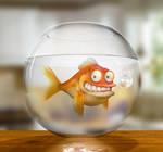 Klaus the German Goldfish