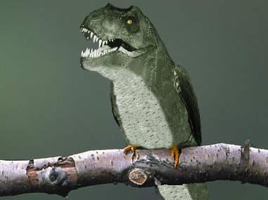 T Rex Bird Hybrid By Darth9220 On Deviantart