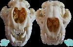 FurFur's animal anatomy stock teaser