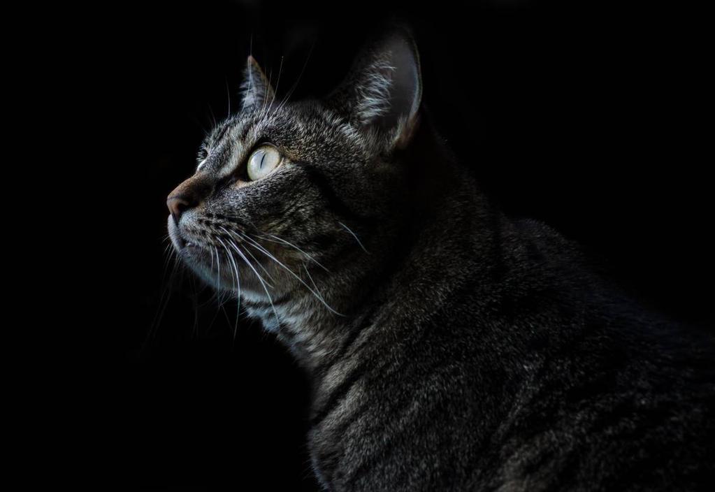 gaze by Lord-FurFur