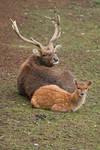 Deer daddy...