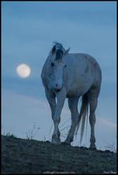 Moonhorse by Wolfling01