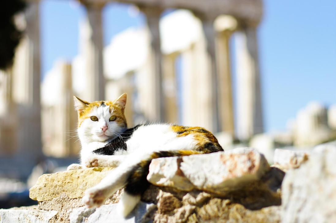 Parthenon cats by Ueberbelichtet