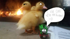 Duck and Ducks