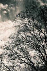 021 Birds