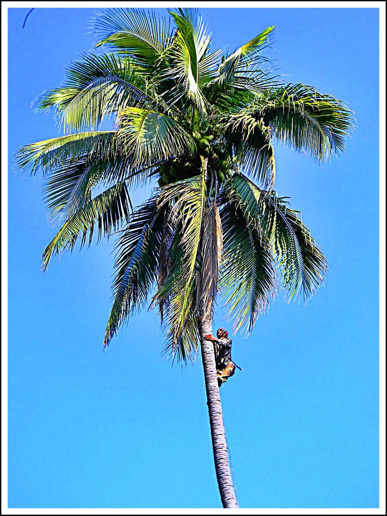 Coconut Man by CrimsonCape