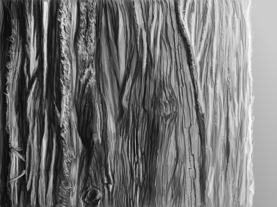 Tree Bark Texture Png 688 kb Png Bark Texture