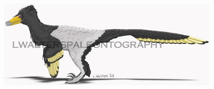 Senter and Robins Velociraptor Update 2017