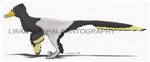 Senter and Robins Velociraptor Update 2017 by LWPaleoArt