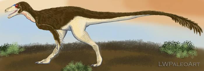 Megaraptorid from Victoria Reconstruction