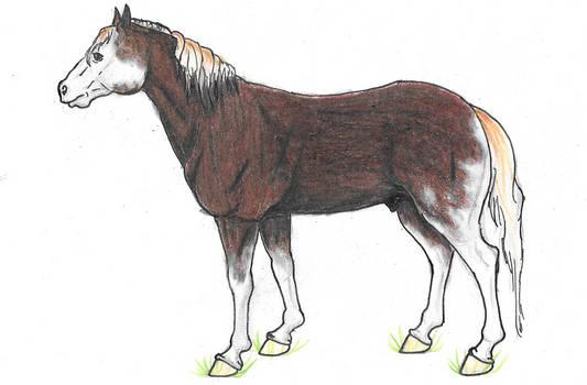 Oakie|NHrpg|Stallion