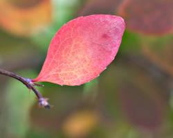 Coloured Leaf