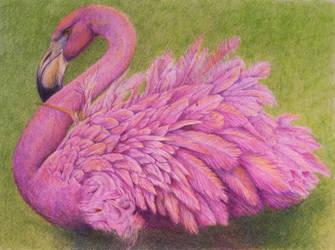 The Flamingo