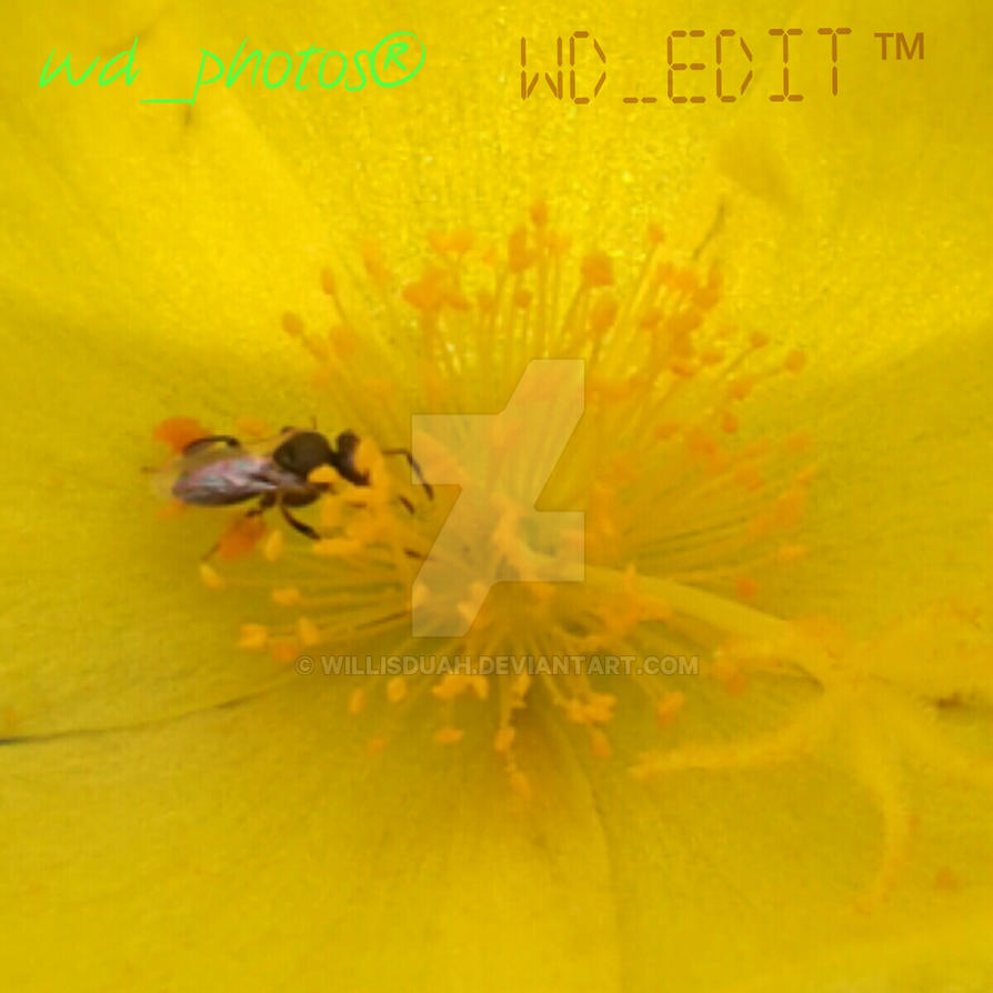 Yellow Pollen Jack by WillisDuah