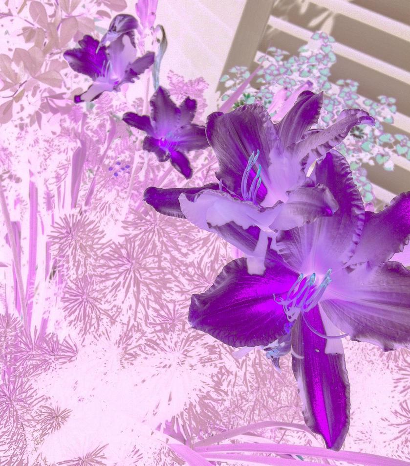 FlowerPowerViolet by theConduktor