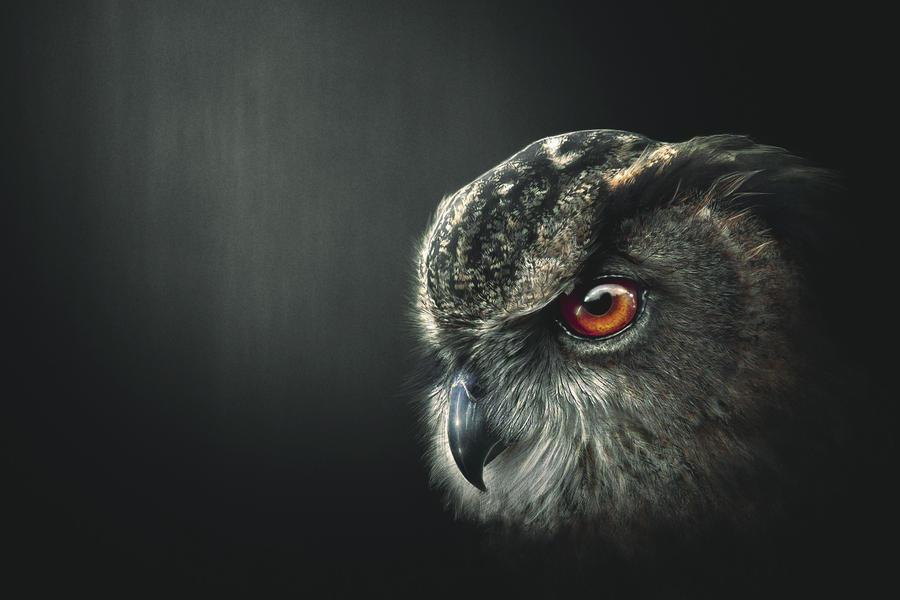An Owl's Wisdom
