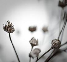 Ce qui est precieux by Karine-Despeaux