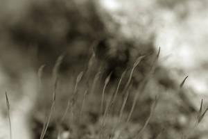Foule by Karine-Despeaux