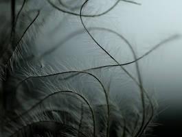Myriapodes by Karine-Despeaux