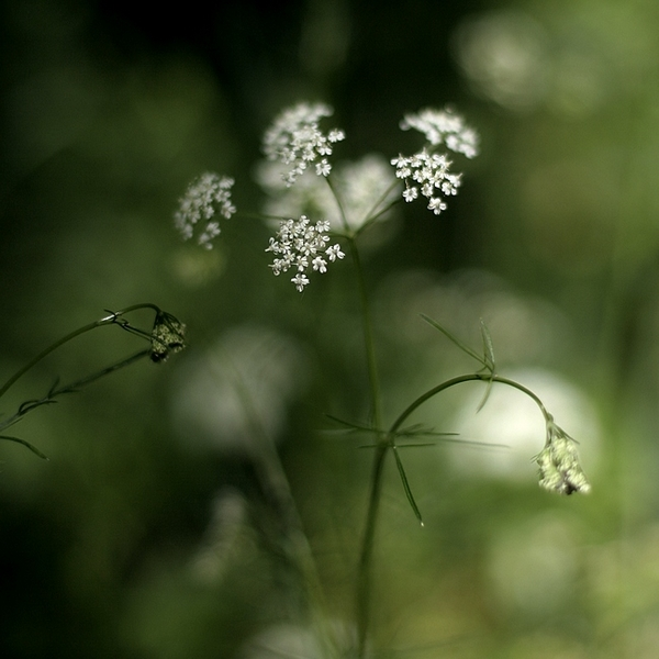 Innocence by Karine-Despeaux