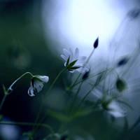 Attraction by Karine-Despeaux