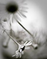 Soleil noir by Karine-Despeaux