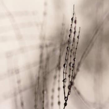 Les larmes de l'arbre by Karine-Despeaux