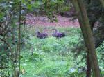 Suspicious Swans