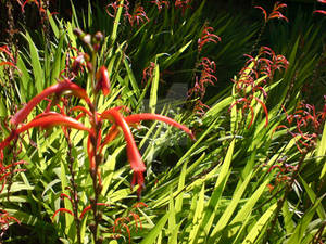 Orange Undergrowth BG