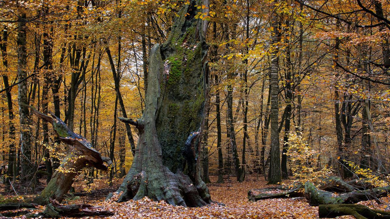 Urwald Sababurg by jant-photo
